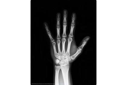 4M Kidz Labs / Glow Human Skeleton